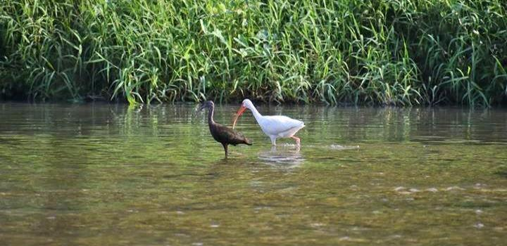 "Aves migratorias al Parque ""Tantocob"""