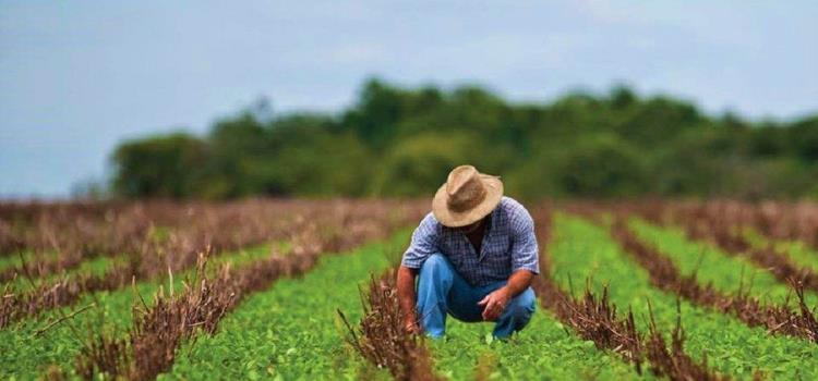Aprobaron iniciativa para la Ley Agrícola