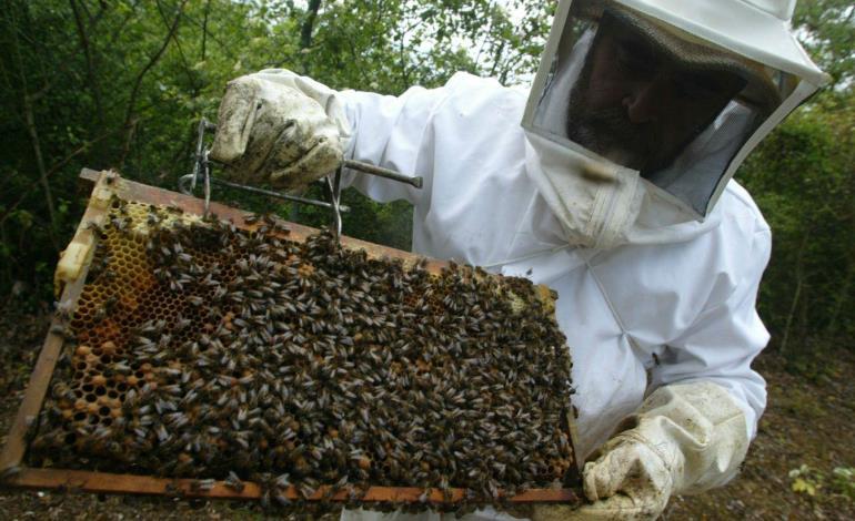 Mueren abejas por rara plaga