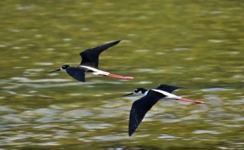 Aves migratorias arriban a la zona