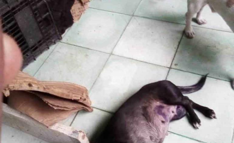 Maltrato animal cometen devotos