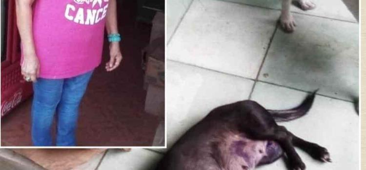 "Atacan mascota en la ""Luz del Mundo"""