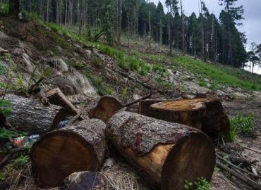 En riesgo bosques por tala clandestina