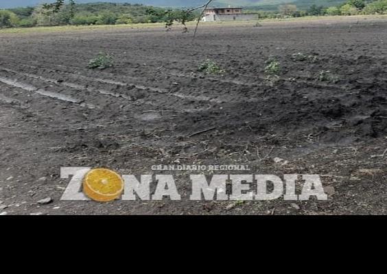 Agricultores están en crisis