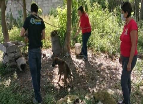 Rescatan perros en malas condiciones