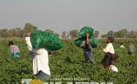 Distribuyen mal apoyos agrícolas