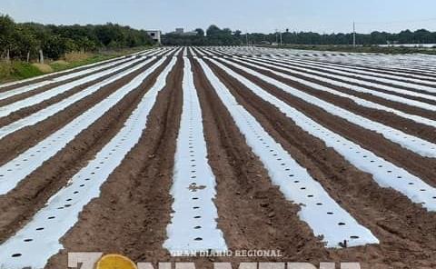 Agricultor anhela buenas cosechas