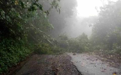 Árbol bloqueó la carretera