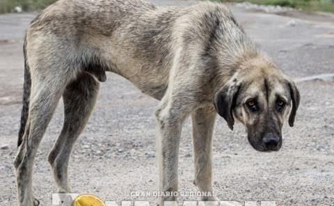 No cesa maltrato a mascotas en ZM