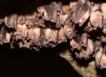 Alerta por colonia de murciélagos