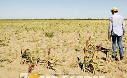 Pedirán proyectos de ganadería y agricultura
