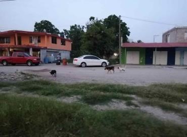 Capturen a los perros callejeros