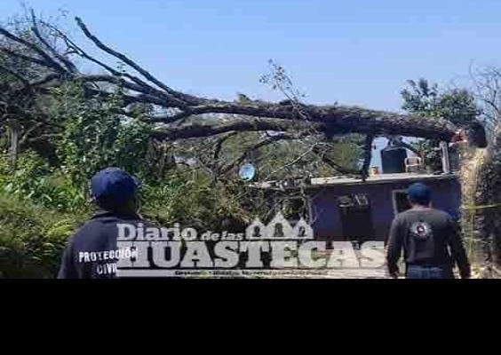 Piden prevenir caída de árboles