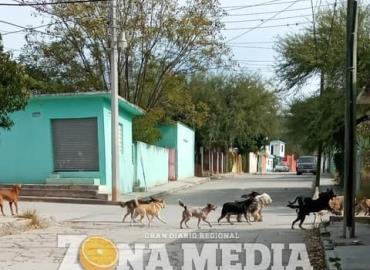 Aumenta riesgo de rabia en mascotas