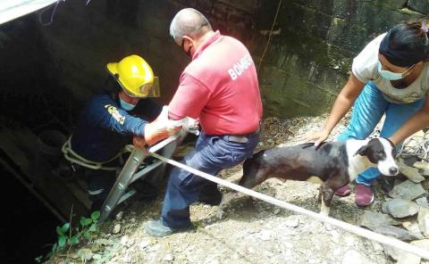 Canito rescatado tras caer a un pozo