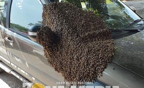 Bomberos acordonaron camioneta con abejas