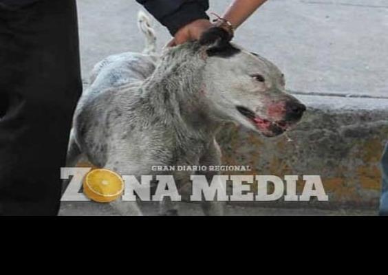 Debe aplicarse la Ley de Protección Animal