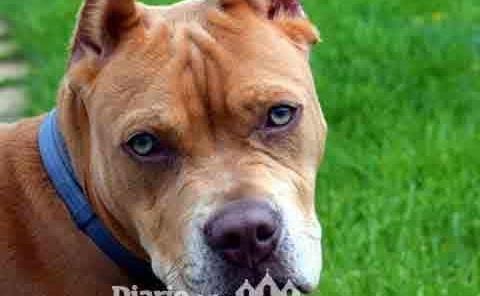 Prohíben cortar orejas y cola a mascotas