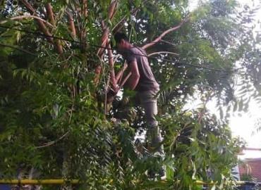 """Desraman árboles para evitar los """"apagones"""""""