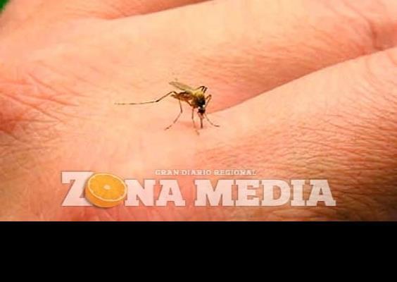 Exhortan a reportar casos de dengue