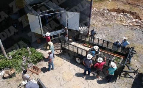 Reforestarán  2,500 hectáreas