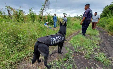 Con perros buscan abuelito extraviado