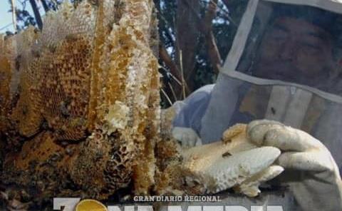 Producción de miel es opción para cerritenses