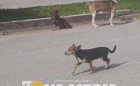 Perros merecen ser rescatados
