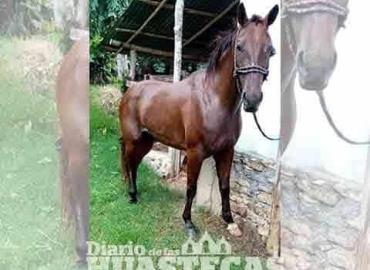 Roban equinos en ranchos ganaderos