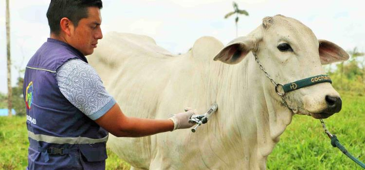 Detectaron rabia paralítica bovina