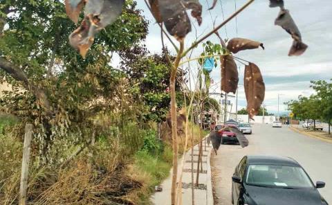 Más árboles se están 'secando'