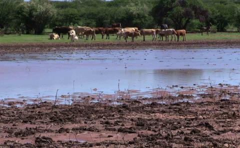 Las lluvias alientan a productores pecuarios