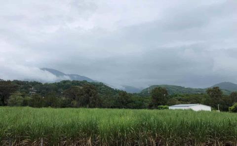 Ambiente óptimo para reforestar la región