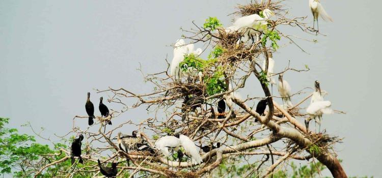 Llegan aves migratorias
