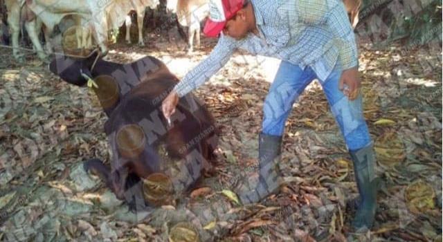 Casos de rabia en el ganado