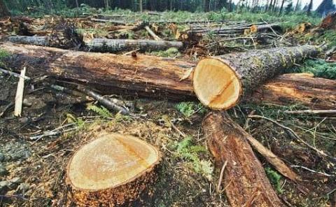 Devastados muchos bosques en la región