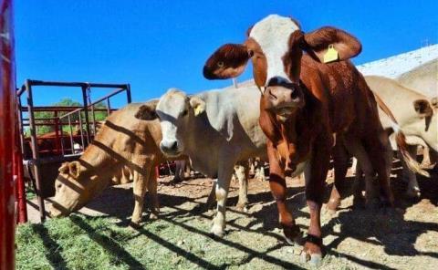 Destinaron 87 MDP a cañeros y ganaderos