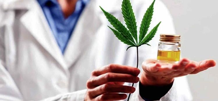 Sí a la marihuana aprobó el Senado
