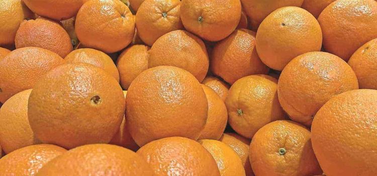 Producción de naranja al alza