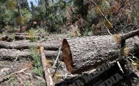 Sigue la tala de árboles en la ZM