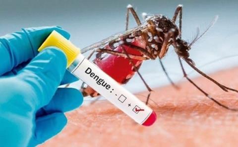 Dengue alcanza los 764 contagios