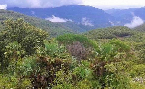 Vigilancia a flora y fauna de Tanchipa