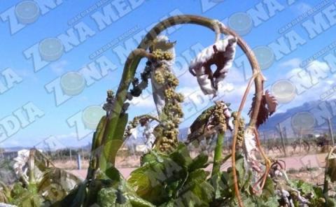 Heladas afectan cultivos de la ZM