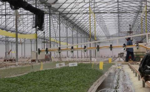 Aumentan hectáreas con riego presurizado