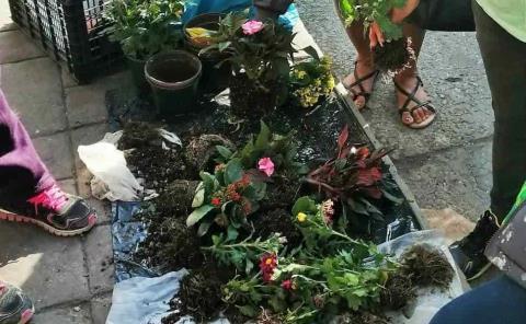 'Comercializan' plantas ilegales