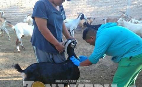 Efectuaron campaña de vacunación contra rabia