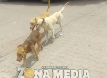"""Piden razzia canina en el barrio """"Guadalupe"""""""