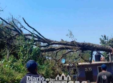 Piden evitar accidentes  por caída de árboles