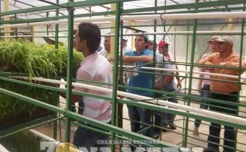 Ganaderos piden producir  forraje en invernaderos