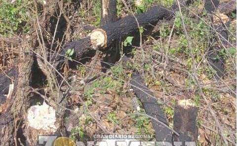 Autoridades ejidales no denuncian la tala